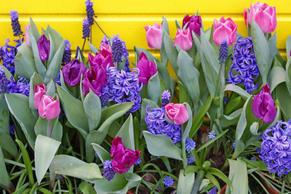Garden_flowers_w300